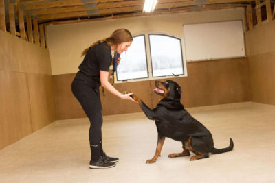 an instructor teaching a rottweiler to give his paw during his obedience class in Mercer County, NJ