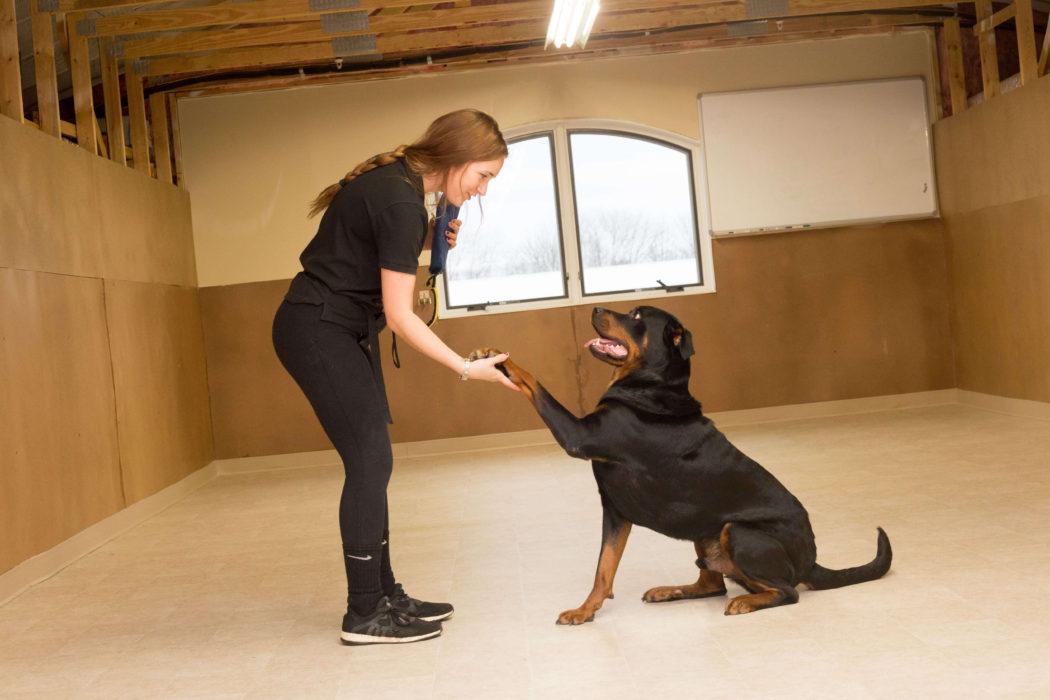 New Jersey\'s Premier Pet Services | Golden Paws Pet Resort & Spa