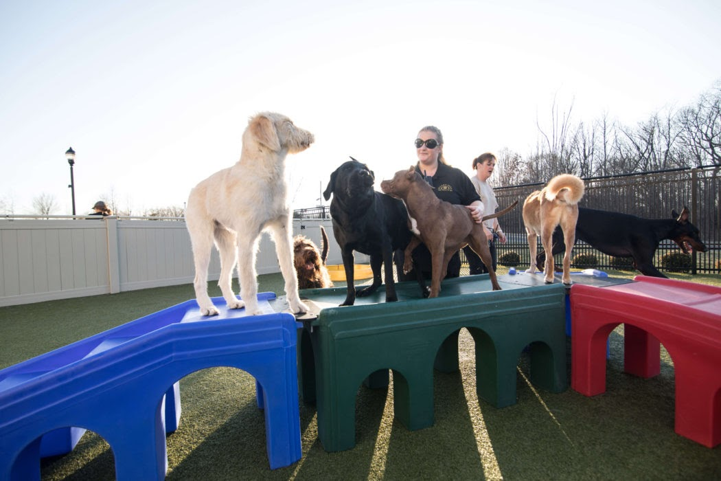 dog trainer playing with dogs